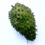 Annona muricata fruit