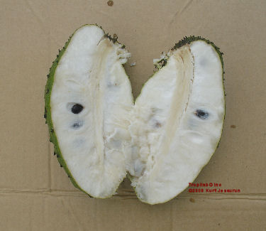 Annona muricata - Graviola cut open fruit
