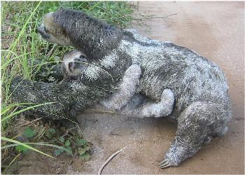 Images amazon rainforest tropilab - Amazon rainforest animals wallpaper ...