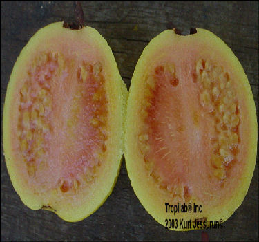 open Guava fruit