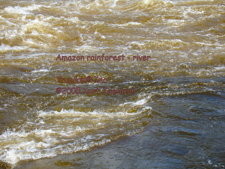 Flowing river in the Amazon rainforest