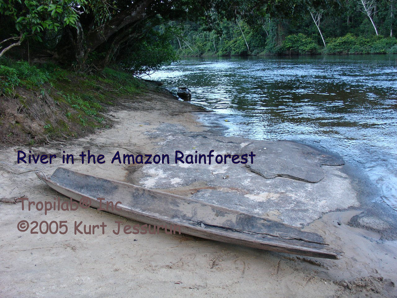 River in the Amazon rainforest