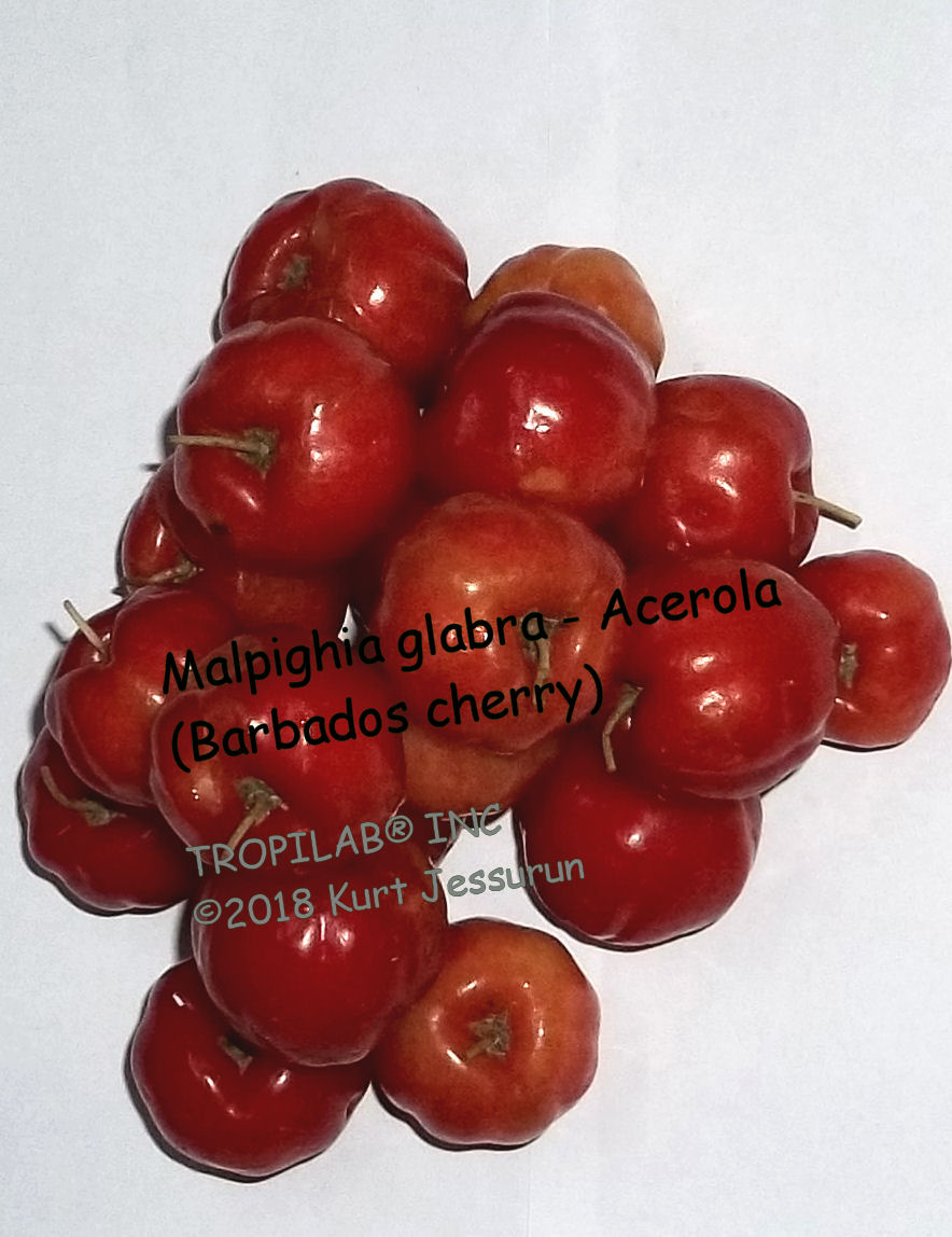 Malpighia glabra, Barbados cherry, aka Acerola, has many different therapeutic 