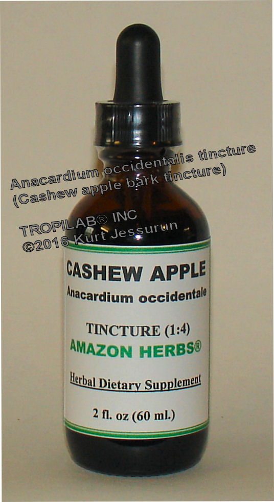 Anacardium occidentale - Cashew apple tincture