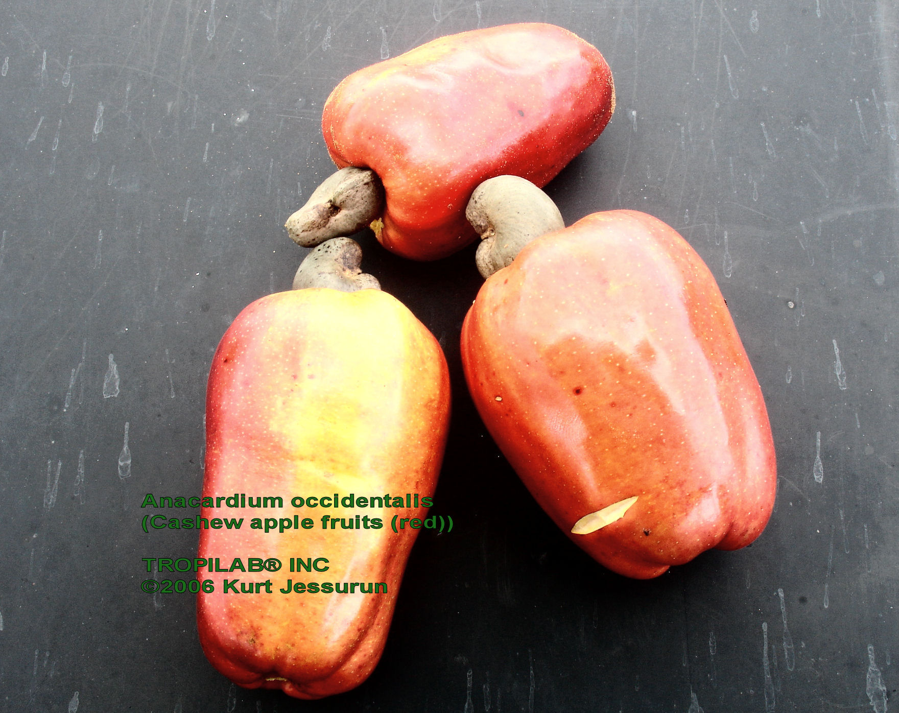 Anacardium occidentale - Cashew apple