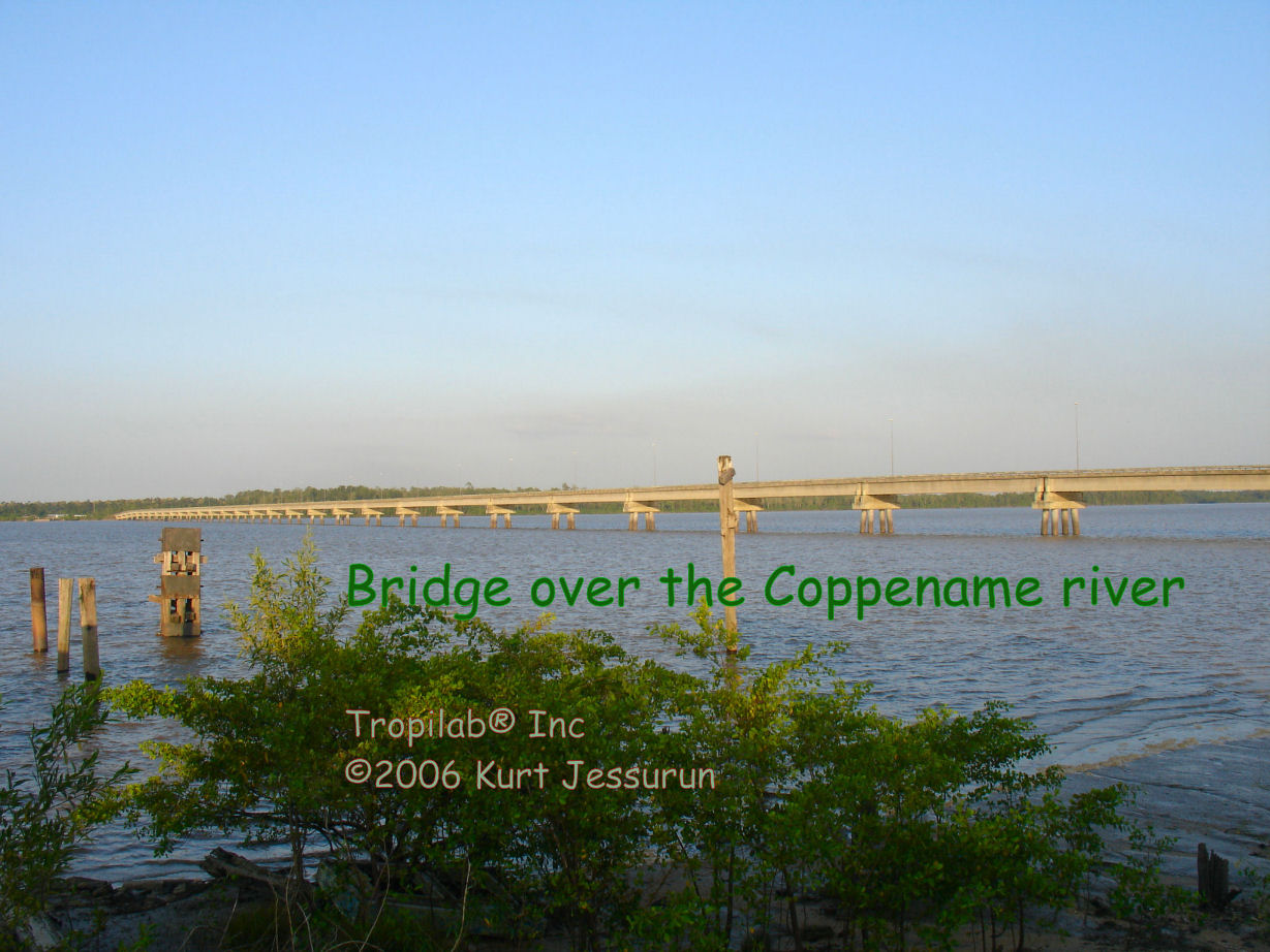 Bridge over the Coppename river