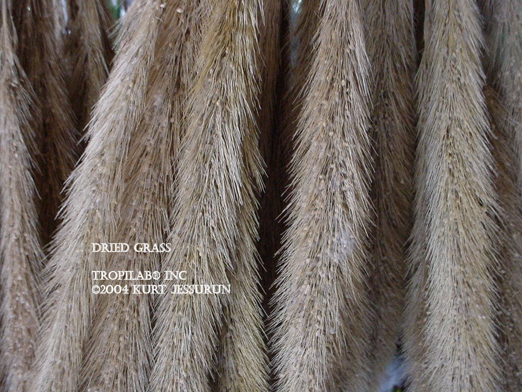 Dried grass