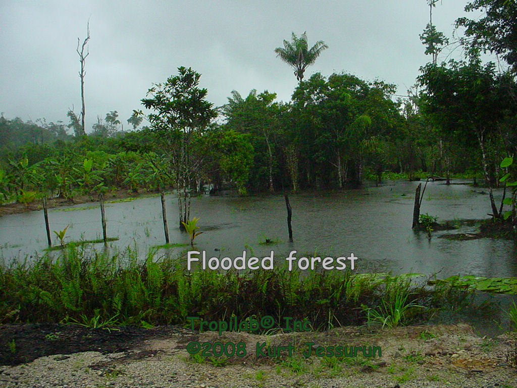 Field day flooded forest