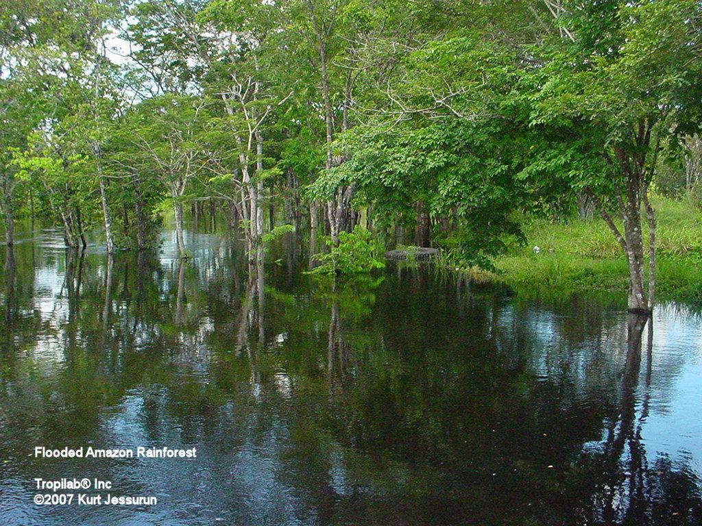Fotos Van Het Amazone Regenwoud