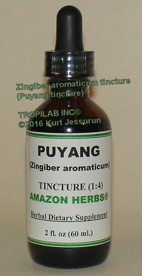 Zingiber aromaticum-Puyang tinture - Tropilab. Has high potential in preventing and controlling