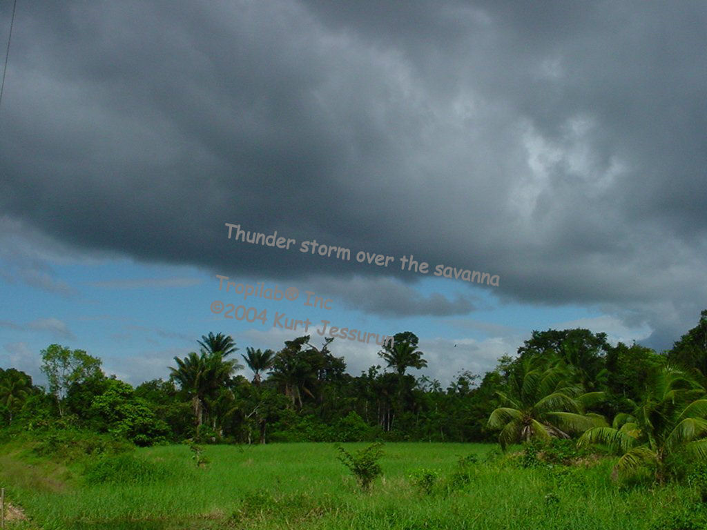 Thunder storm over the savanna