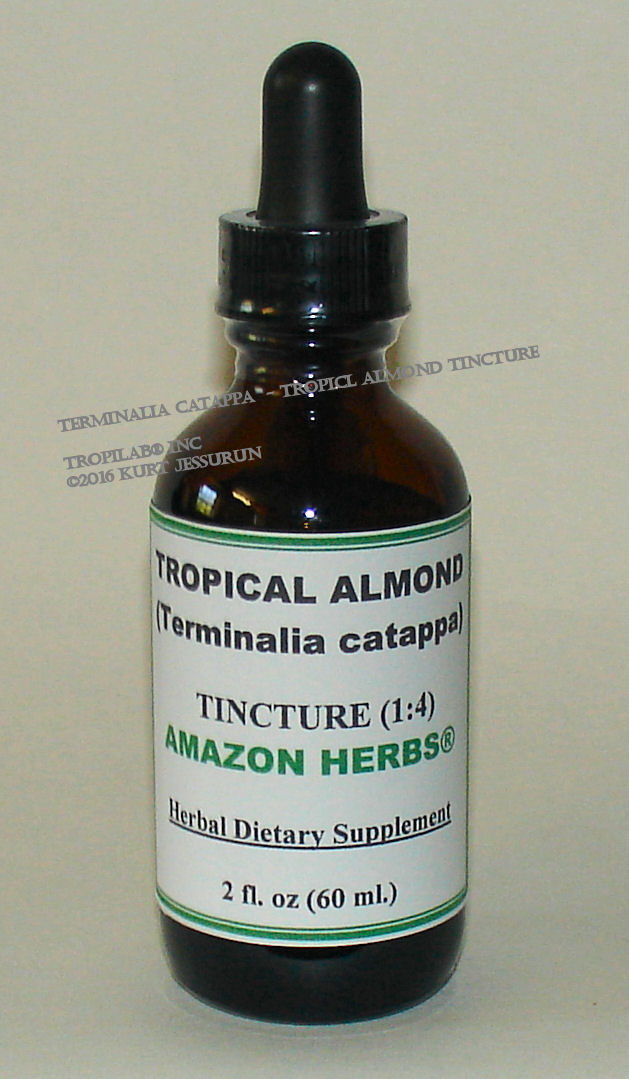 Terminalia catappa - Tropical almond tincture, price US$18.65 p/2 fl oz. Terminalia catappa possesses good antihepatotoxic